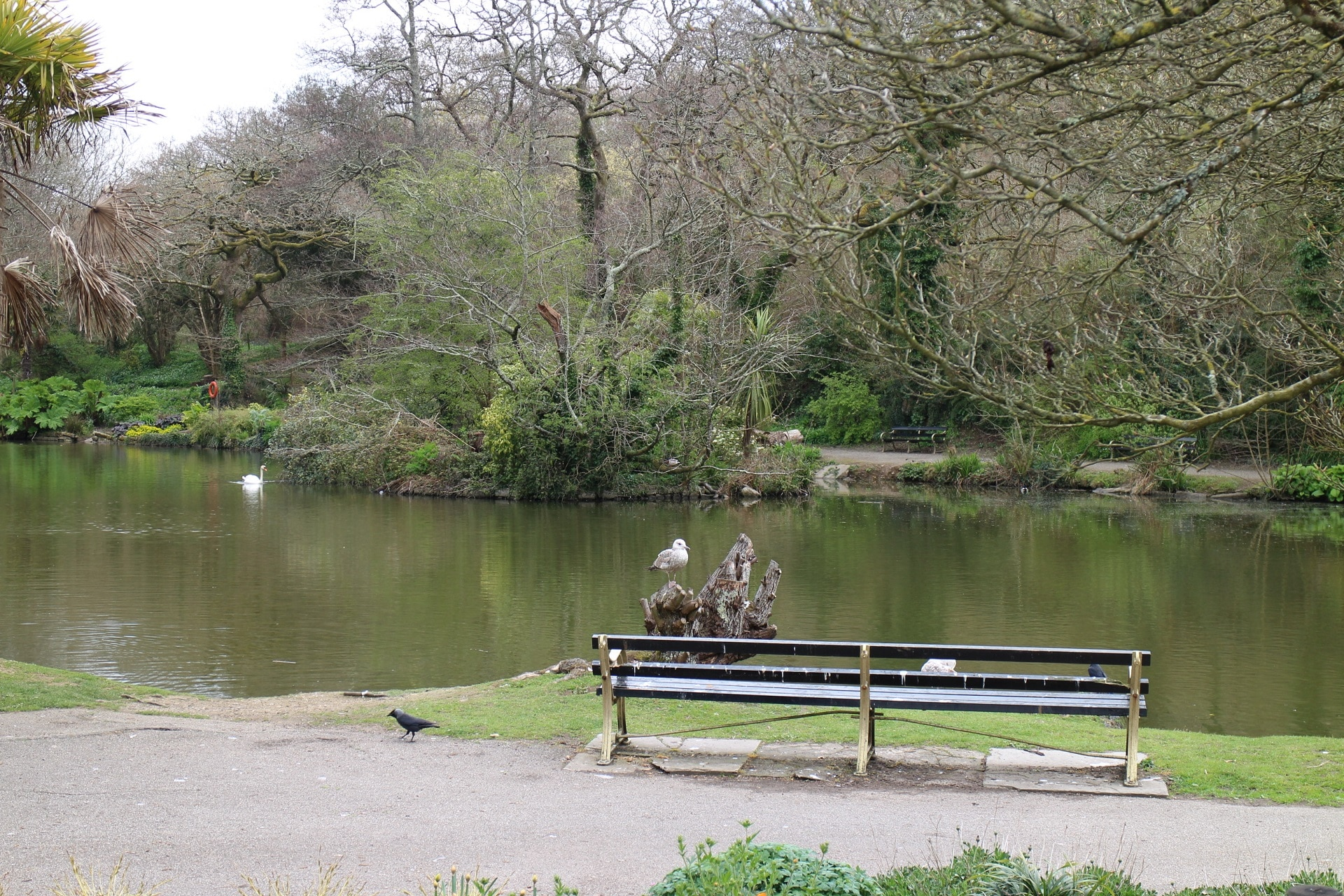 Pond with a seat in the foreground