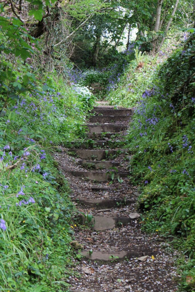 Malpas to St Clement Walk - Steps with bluebells leading out of Malpas